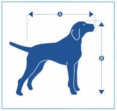 Medidas do cachorro comprimento e altura